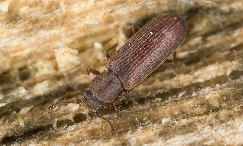 Bug Identifier Arizona Pest Control