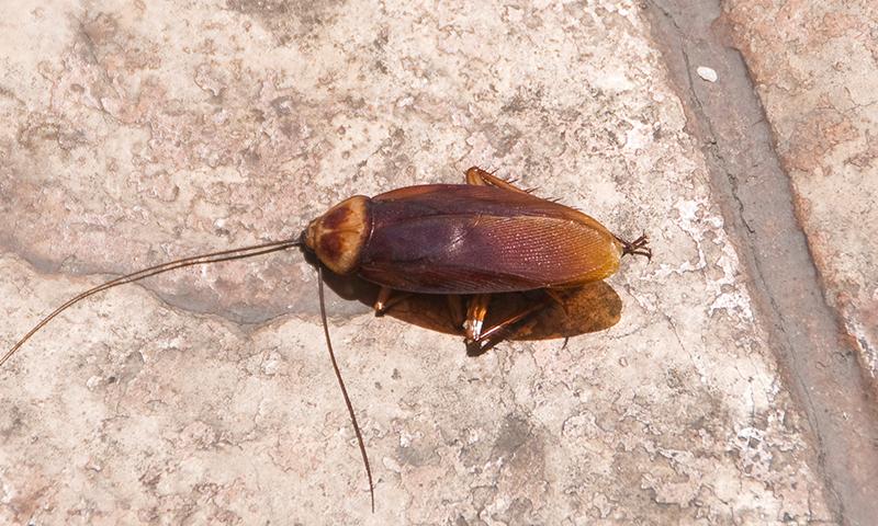 Bug Identifier | Arizona Pest Control