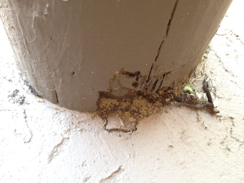 Importance Of Getting Annual Termite Inspections In Tucson Az