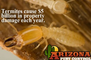 Tucson Termite inspection