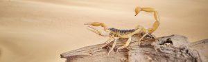 Desert Pests