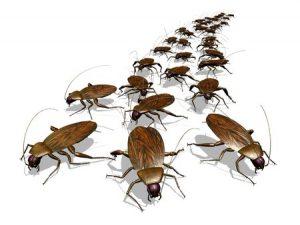 Cockroach Control Tucson