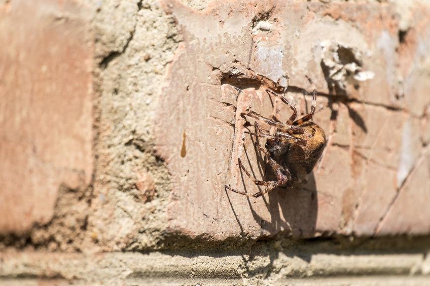 Tucson Spider Control