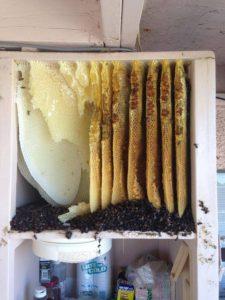 Tucson Bee Control